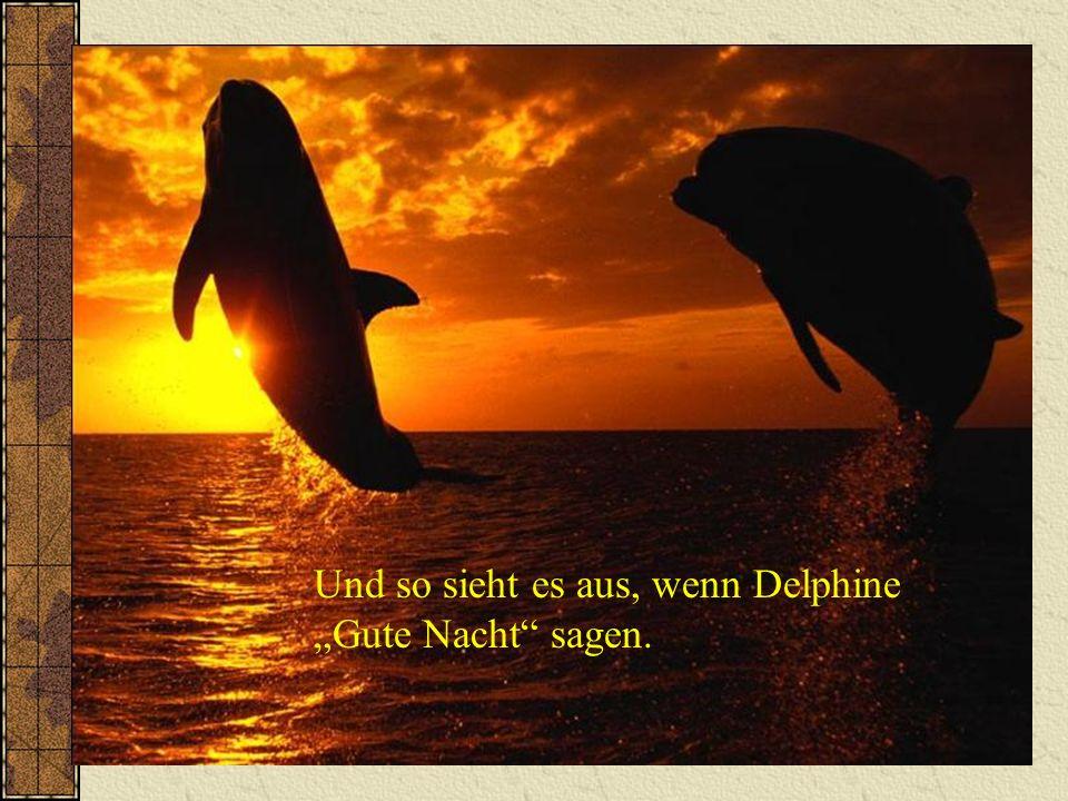 """Und so sieht es aus, wenn Delphine """"Gute Nacht sagen."""