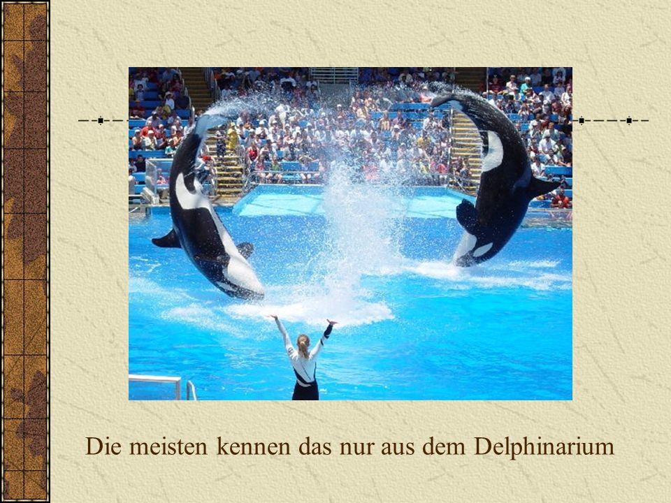Die meisten kennen das nur aus dem Delphinarium