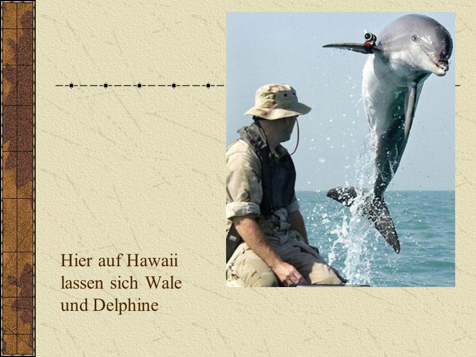 Hier auf Hawaii lassen sich Wale und Delphine