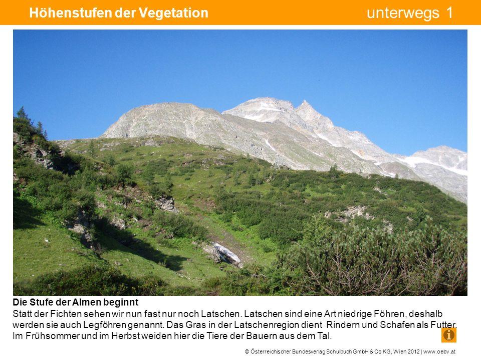 Höhenstufen der Vegetation
