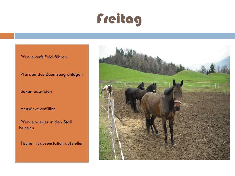 Freitag Pferde aufs Feld führen Pferden das Zaumzeug anlegen