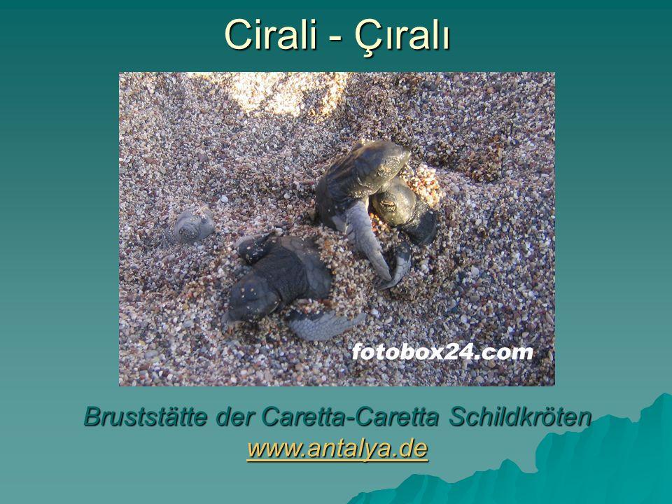 Bruststätte der Caretta-Caretta Schildkröten www.antalya.de