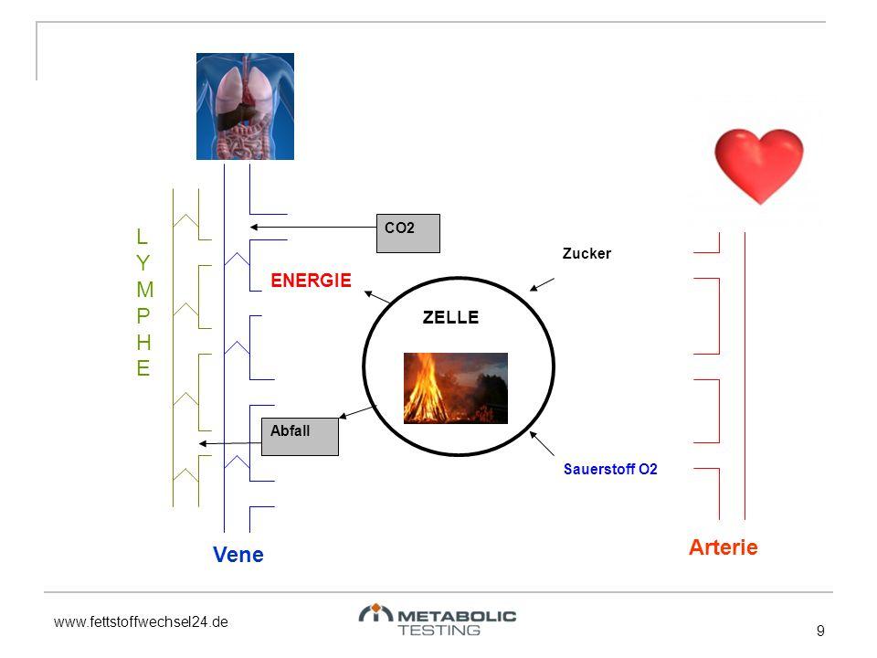 LYMPHE Arterie Vene ENERGIE ZELLE CO2 Zucker Abfall Sauerstoff O2 9