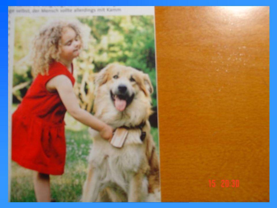 Allgemeines zur Gesundheit von Hunden