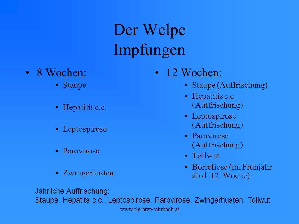 Der Welpe Impfungen 8 Wochen: 12 Wochen: Staupe Hepatitis c.c.