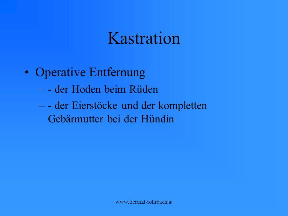 Kastration Operative Entfernung - der Hoden beim Rüden