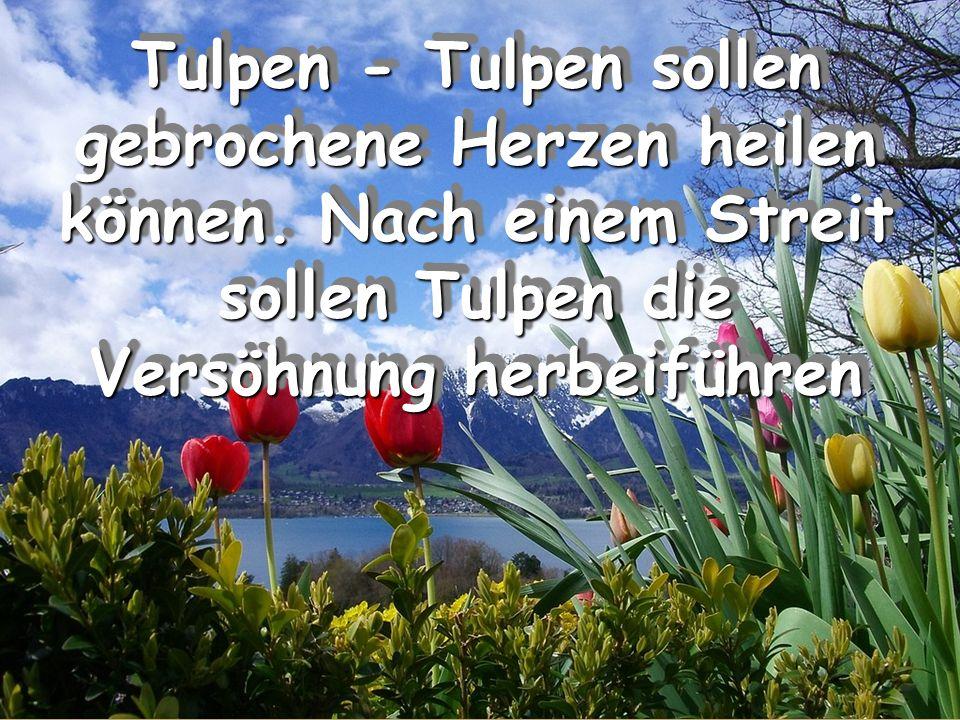 Tulpen - Tulpen sollen gebrochene Herzen heilen können
