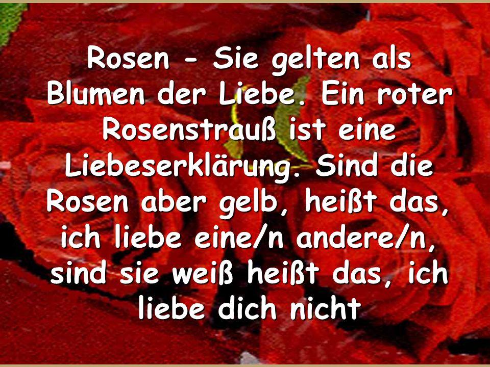 Rosen - Sie gelten als Blumen der Liebe