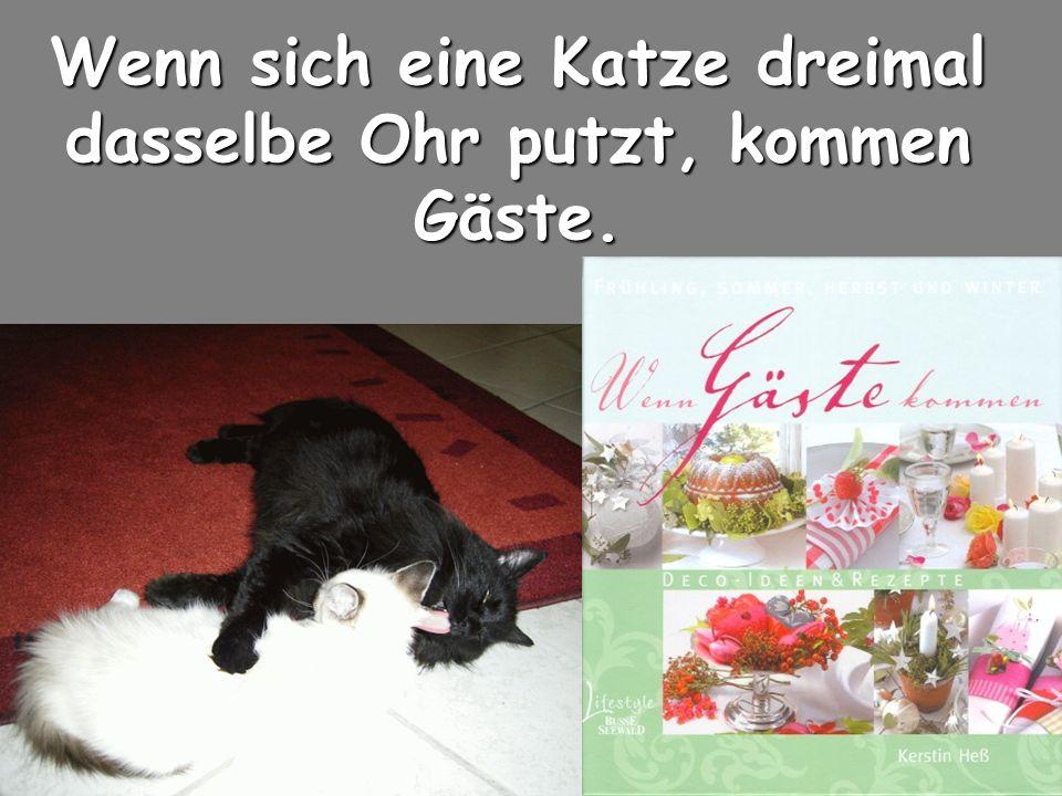 Wenn sich eine Katze dreimal dasselbe Ohr putzt, kommen Gäste.