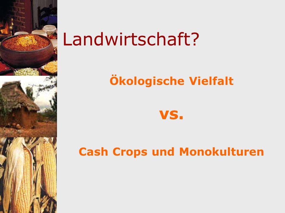 Cash Crops und Monokulturen