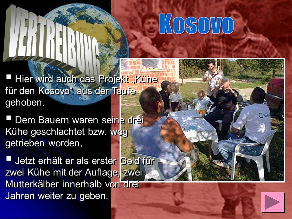 """Kosovo VERTREIBUNG. Hier wird auch das Projekt """"Kühe für den Kosovo aus der Taufe gehoben."""