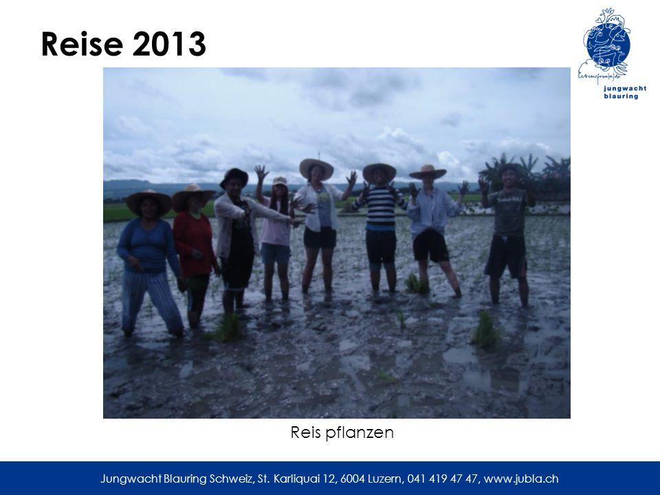 Reise 2013 Reis pflanzen