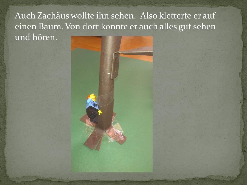 Auch Zachäus wollte ihn sehen. Also kletterte er auf einen Baum