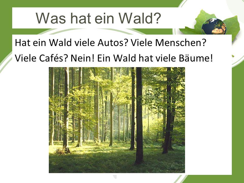 Was hat ein Wald. Hat ein Wald viele Autos. Viele Menschen.