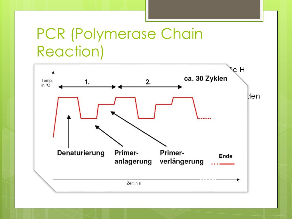 PCR (Polymerase Chain Reaction)