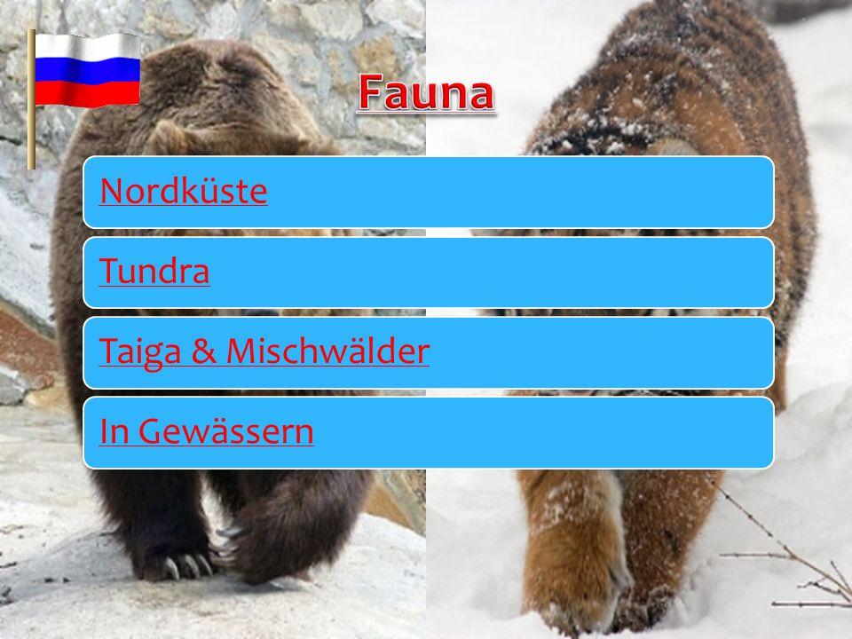 Fauna Nordküste Tundra Taiga & Mischwälder In Gewässern