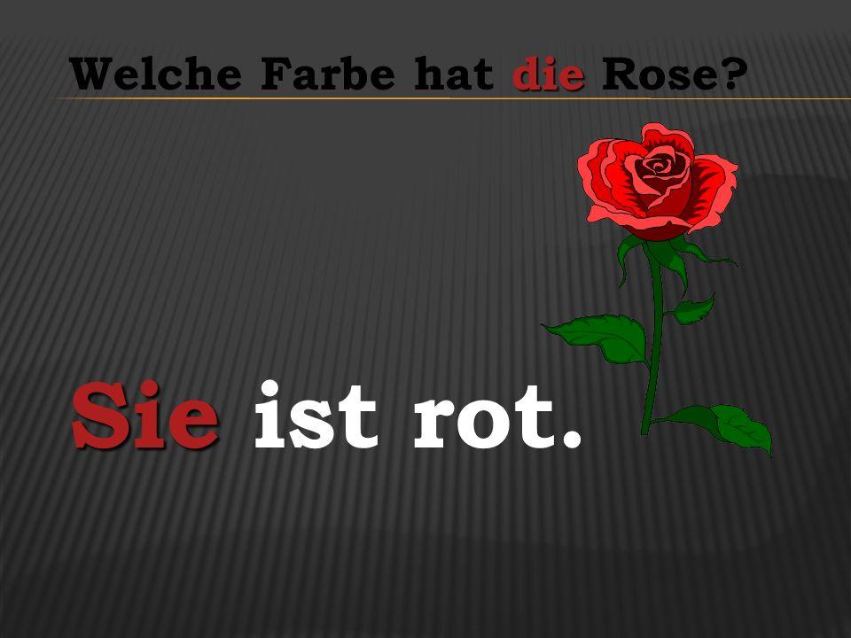 Welche Farbe hat die Rose