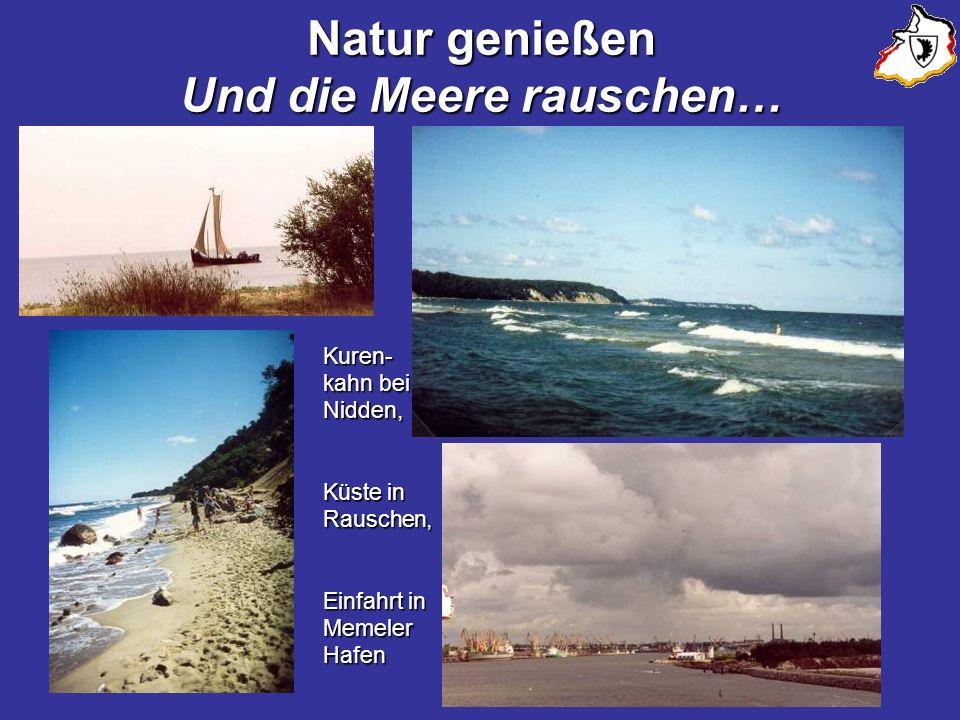 Natur genießen Und die Meere rauschen…
