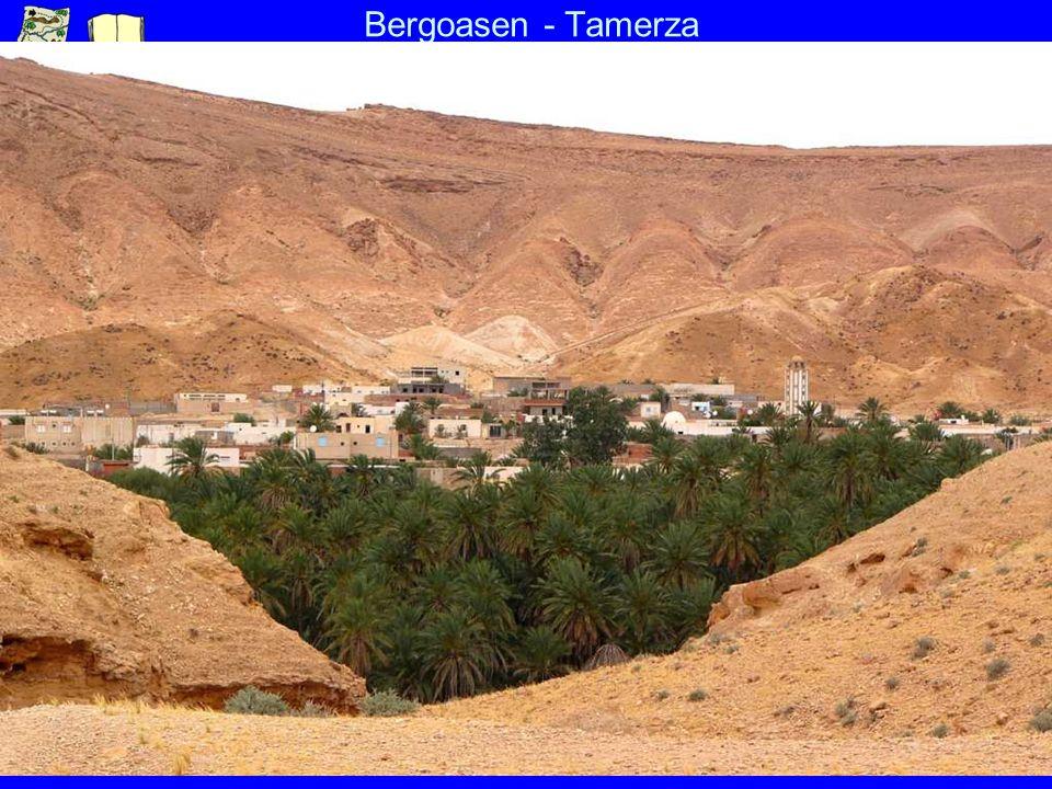 Bergoasen - Tamerza