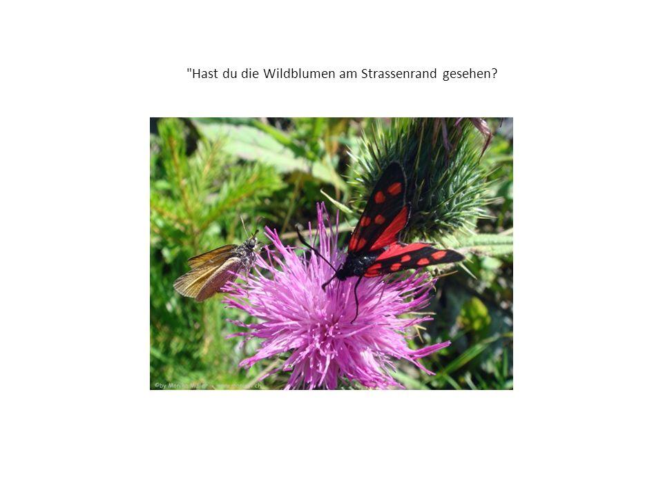 Hast du die Wildblumen am Strassenrand gesehen