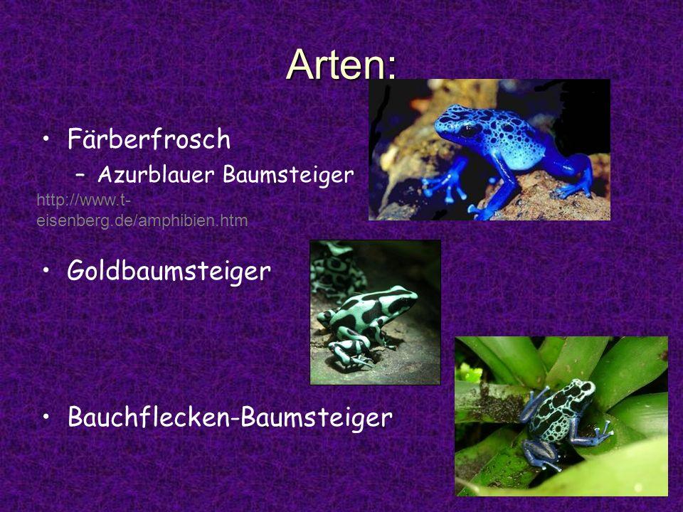 Arten: Färberfrosch Goldbaumsteiger Bauchflecken-Baumsteiger