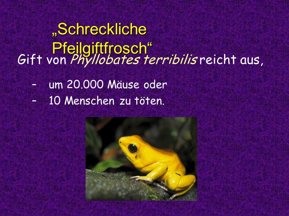 """""""Schreckliche Pfeilgiftfrosch"""