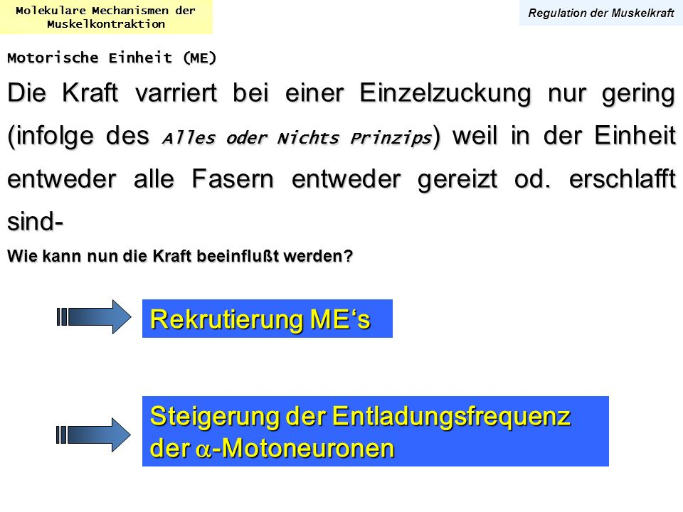 Molekulare Mechanismen der Regulation der Muskelkraft