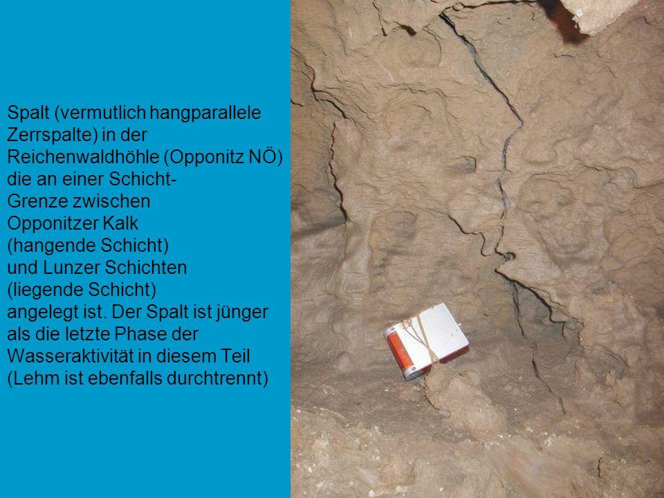 Spalt (vermutlich hangparallele Zerrspalte) in der Reichenwaldhöhle (Opponitz NÖ) die an einer Schicht- Grenze zwischen Opponitzer Kalk (hangende Schicht) und Lunzer Schichten (liegende Schicht) angelegt ist.