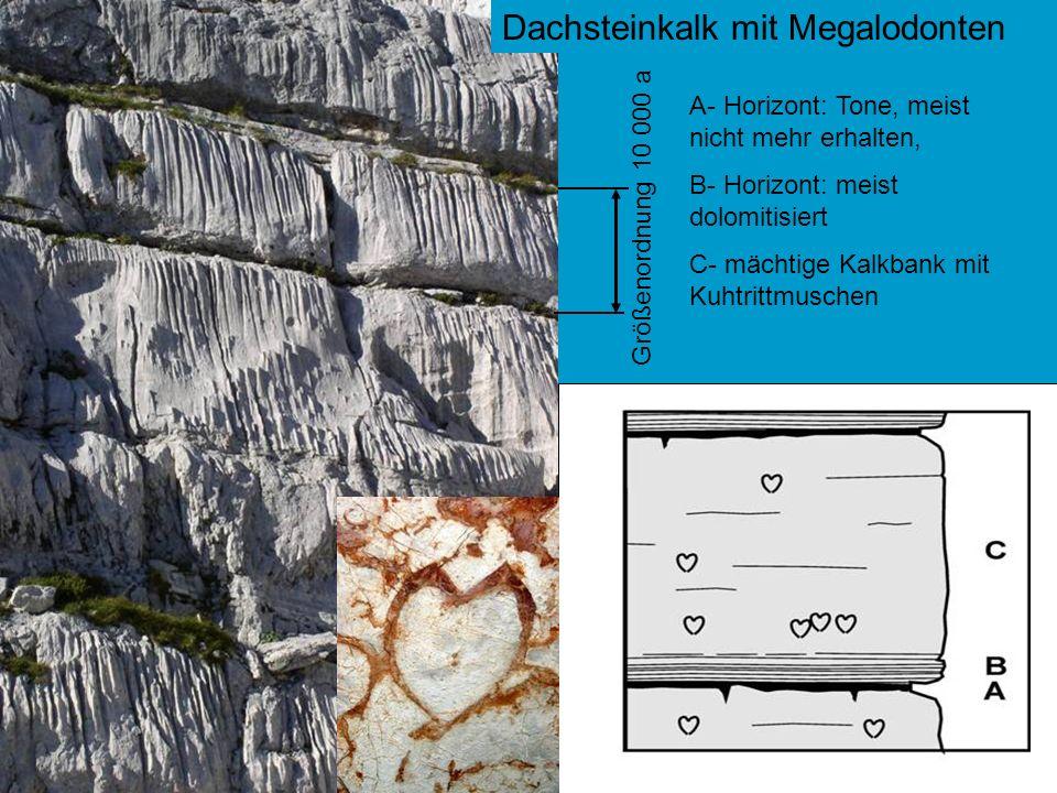 Dachsteinkalk mit Megalodonten