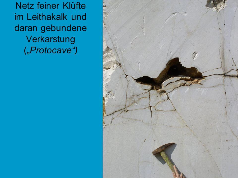 "Netz feiner Klüfte im Leithakalk und daran gebundene Verkarstung (""Protocave )"