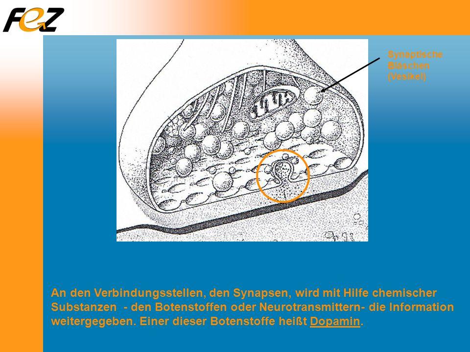 Synaptische Bläschen (Vesikel)