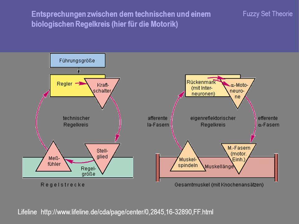 Entsprechungen zwischen dem technischen und einem biologischen Regelkreis (hier für die Motorik)