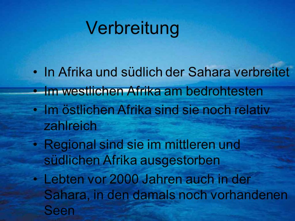 Verbreitung In Afrika und südlich der Sahara verbreitet
