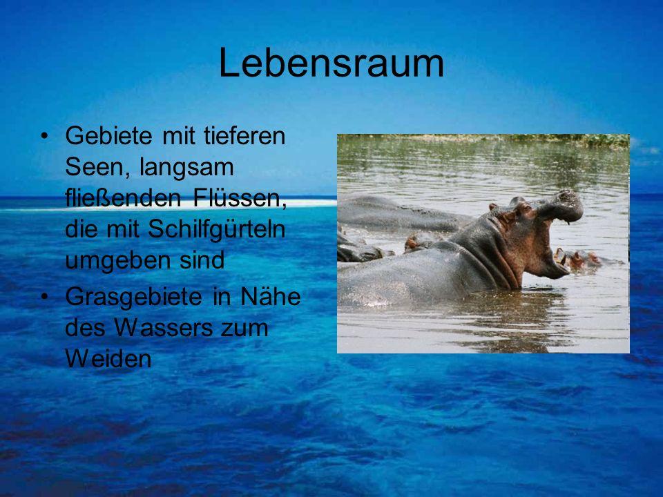 Lebensraum Gebiete mit tieferen Seen, langsam fließenden Flüssen, die mit Schilfgürteln umgeben sind.