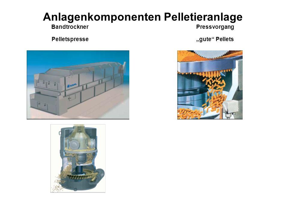 """Anlagenkomponenten Pelletieranlage Bandtrockner Pressvorgang Pelletspresse """"gute Pellets"""