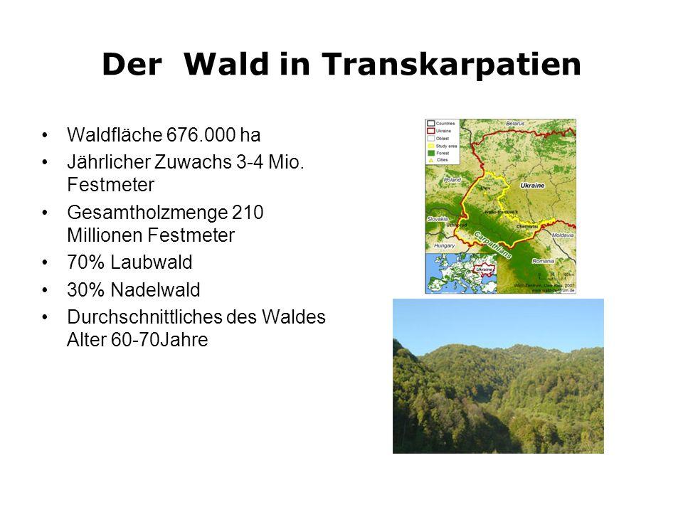 Der Wald in Transkarpatien