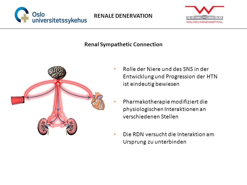 Renal Sympathetic Connection