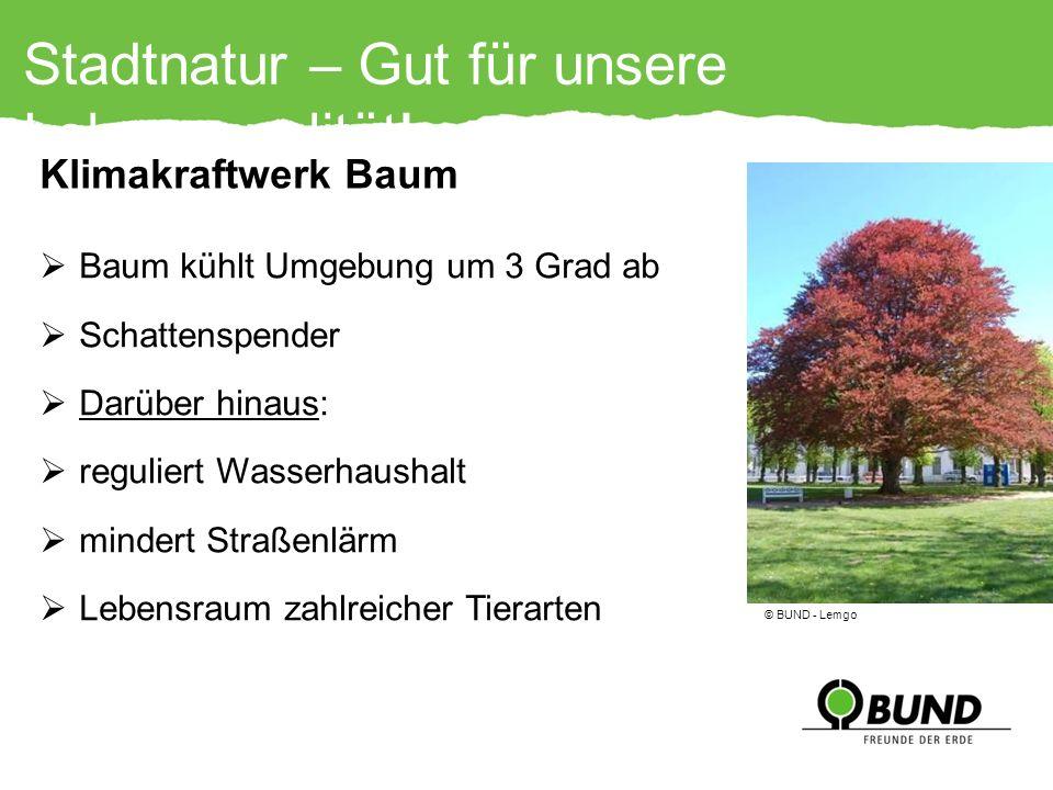 Stadtnatur – Gut für unsere Lebensqualität!