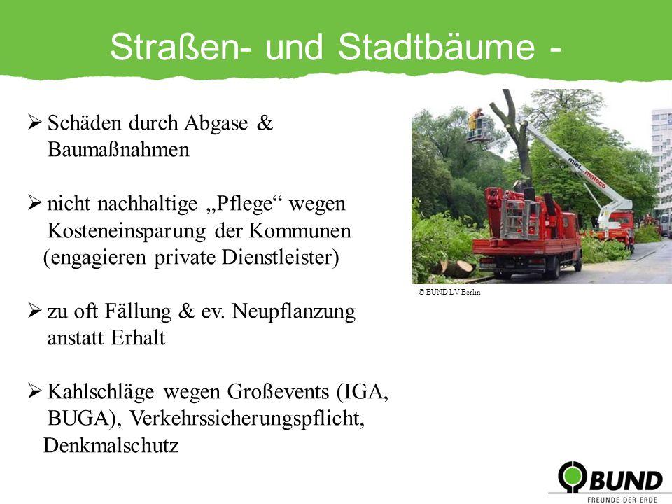 Straßen- und Stadtbäume - Gefährdungen
