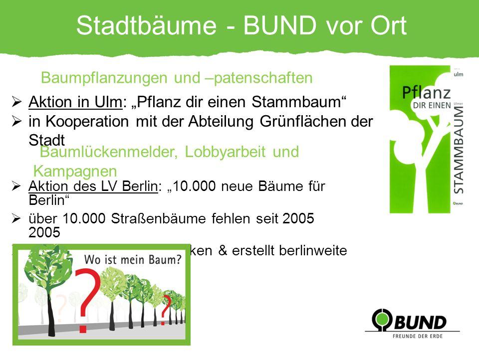 Stadtbäume - BUND vor Ort