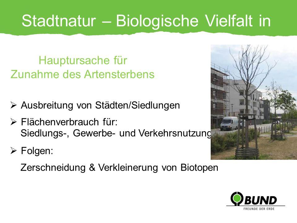 Stadtnatur – Biologische Vielfalt in Gefahr!