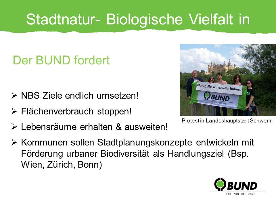 Stadtnatur- Biologische Vielfalt in Gefahr!