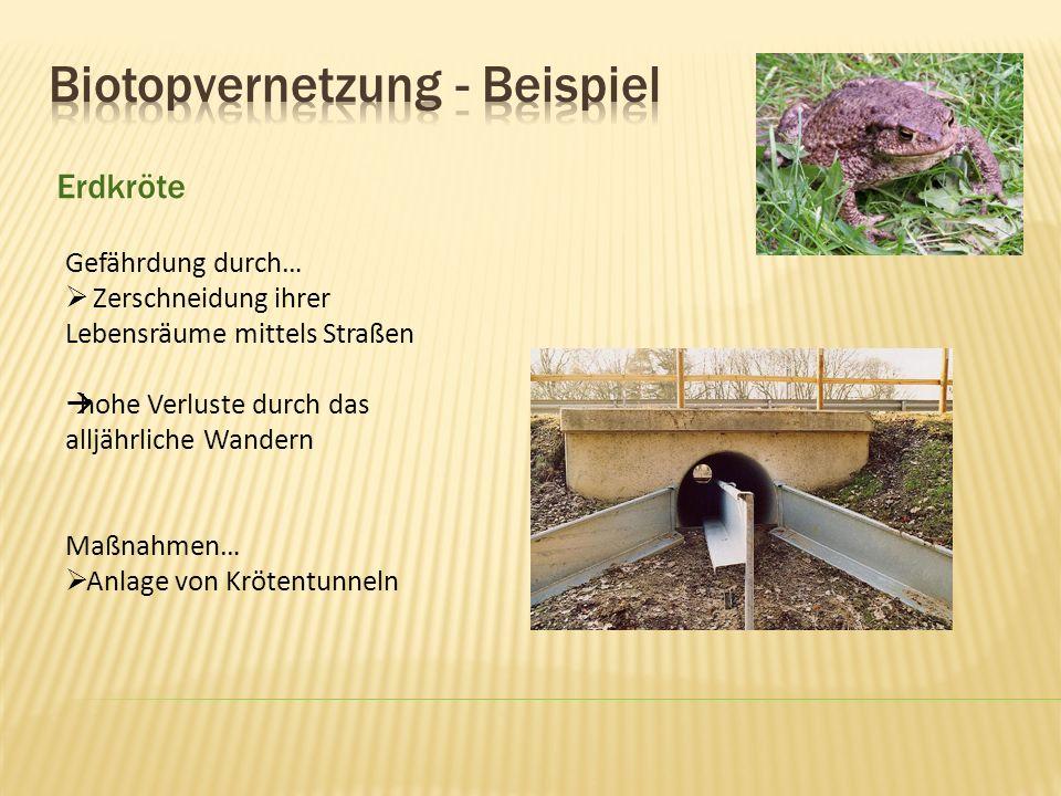 Biotopvernetzung - Beispiel