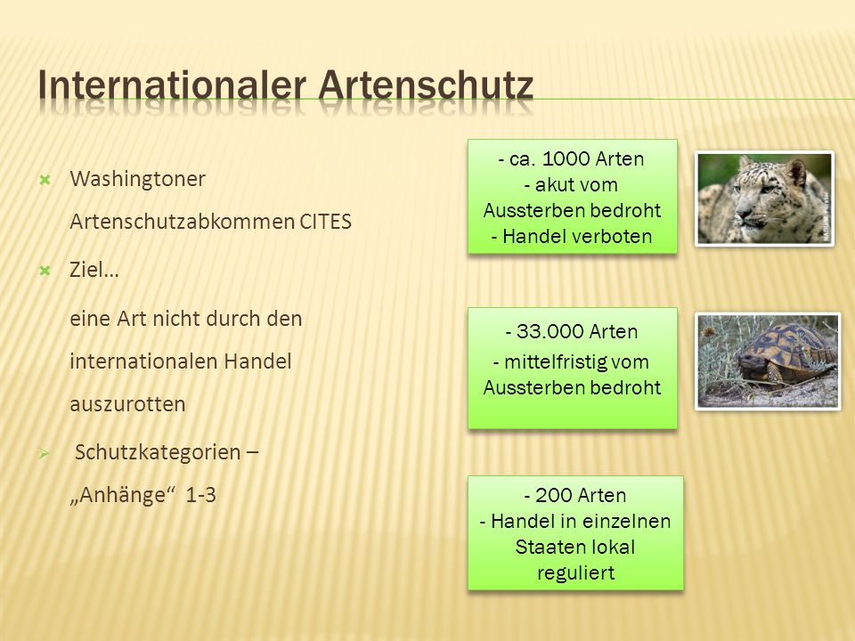 Internationaler Artenschutz