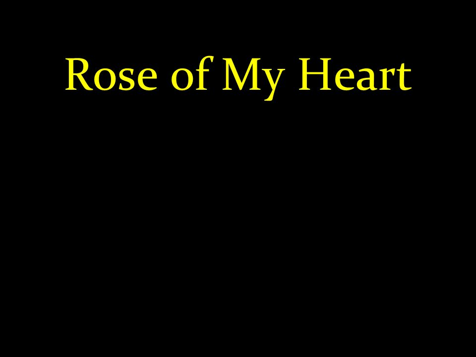 Rose of My Heart