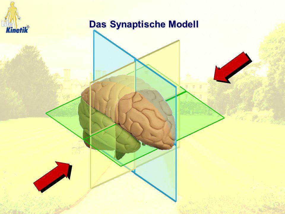 Das Synaptische Modell