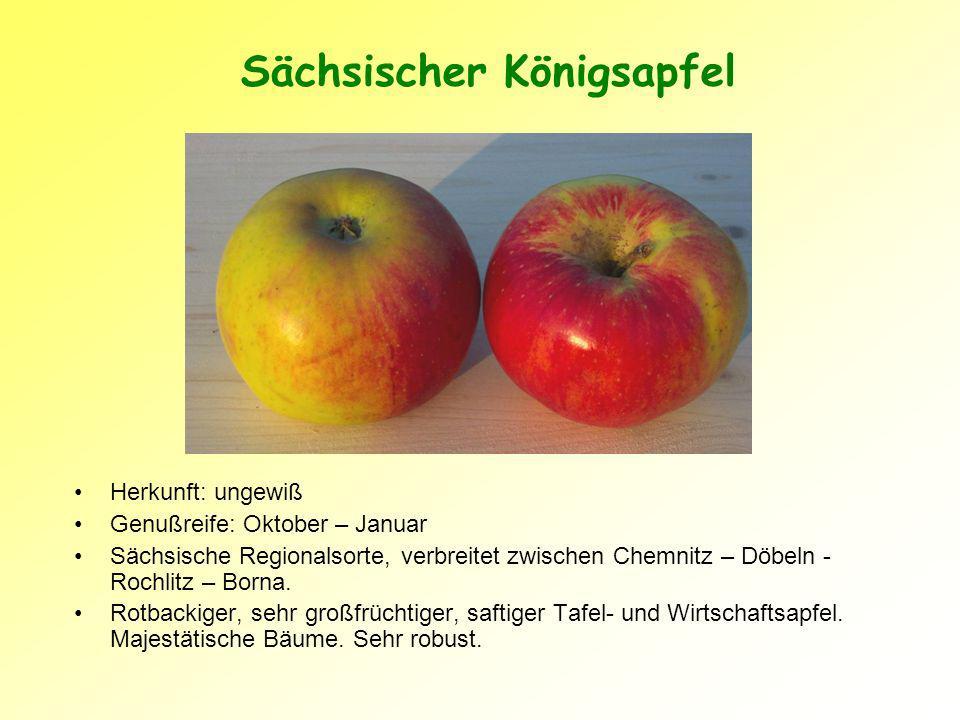 Sächsischer Königsapfel