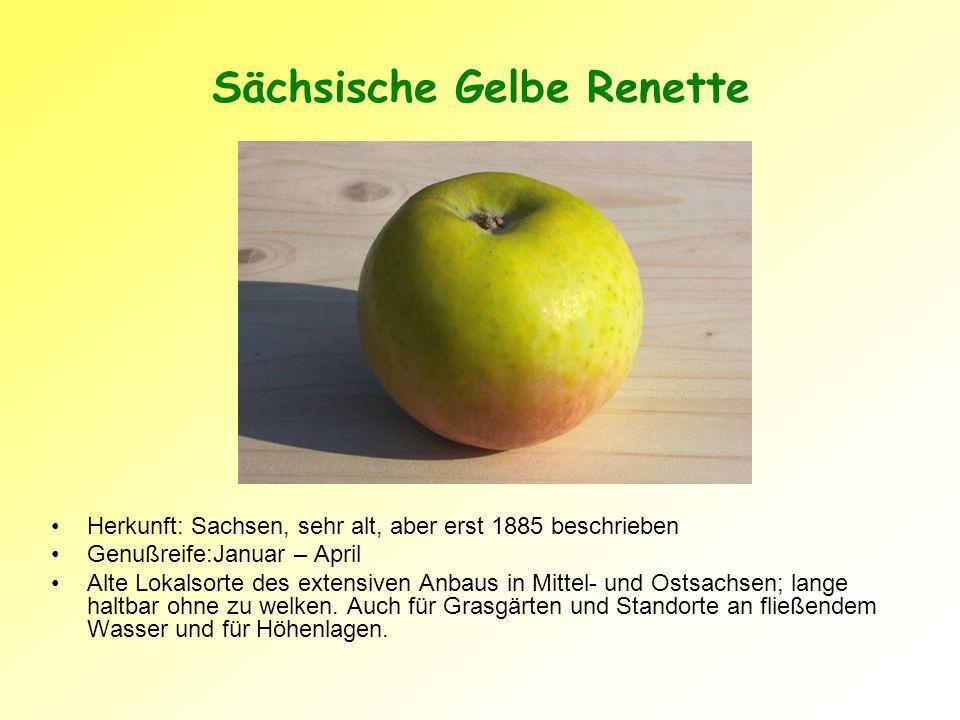 Sächsische Gelbe Renette