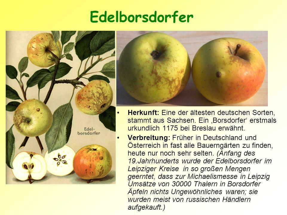 Edelborsdorfer Herkunft: Eine der ältesten deutschen Sorten, stammt aus Sachsen. Ein 'Borsdorfer' erstmals urkundlich 1175 bei Breslau erwähnt.