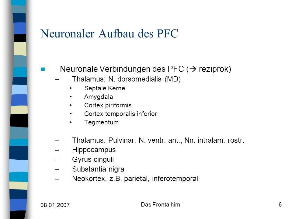Neuronaler Aufbau des PFC
